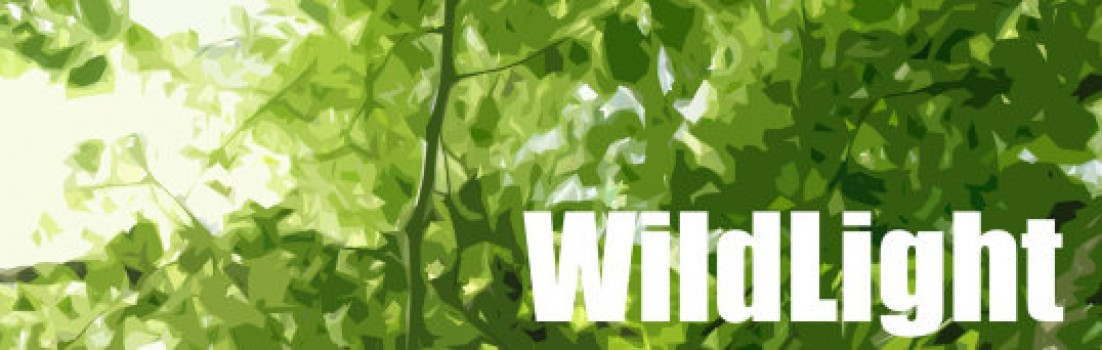 cropped-wildlight-banner.jpg